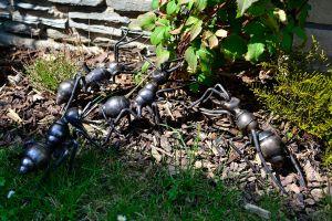 kovaná plastika mravenci