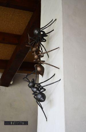 kovaní  mravenci