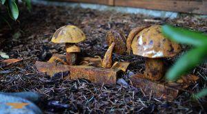 kované houby